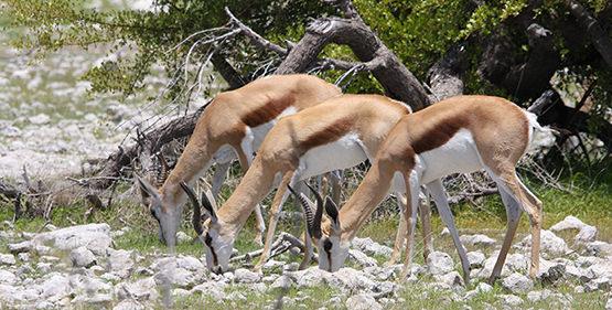 11-days-windhoek-onkojima-swakopmund