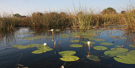 Okavango - Victoria Falls