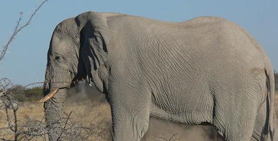 8-days-windhoek-swakopmund